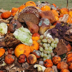 Thumbnail-Photo: Solving the massive food waste problem